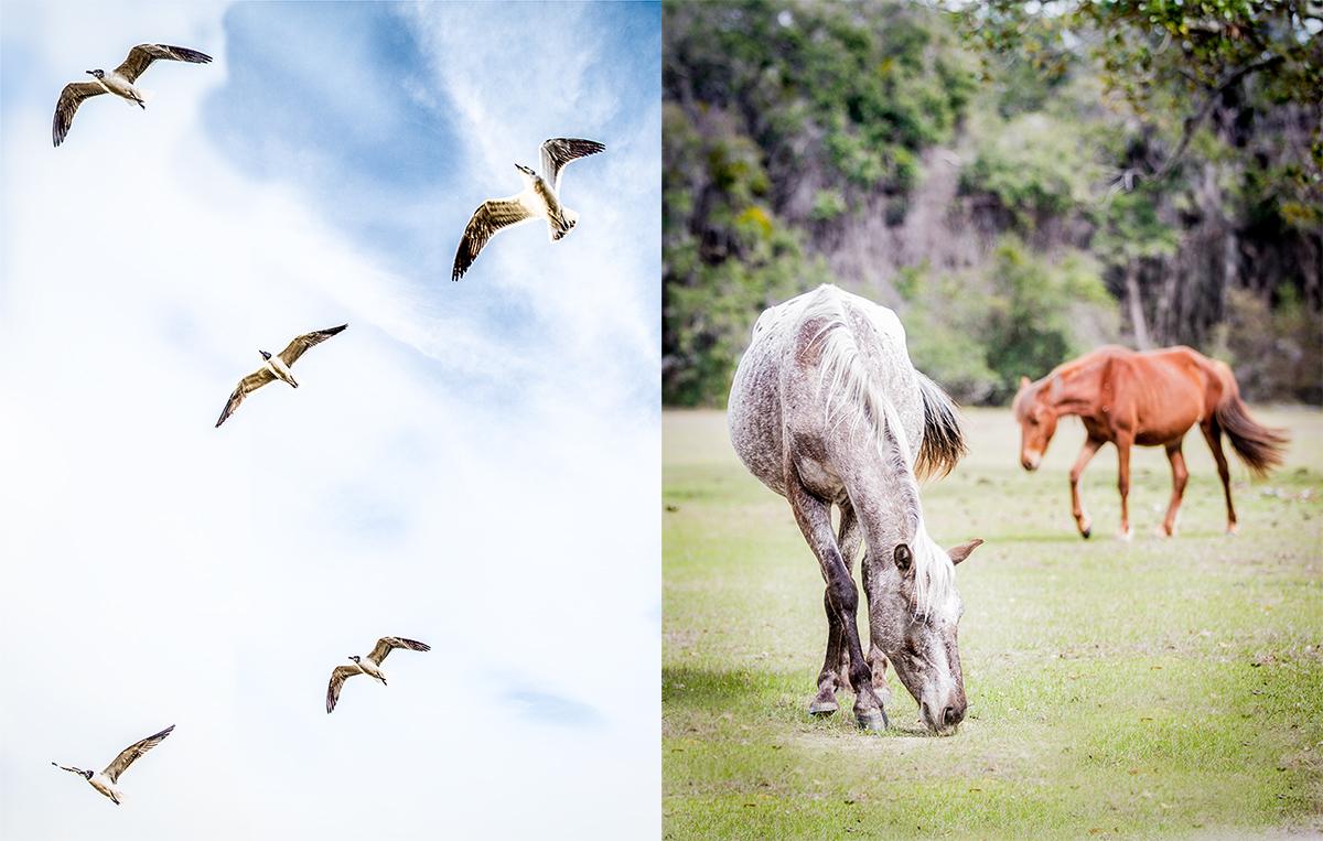 Horses-_-Birds