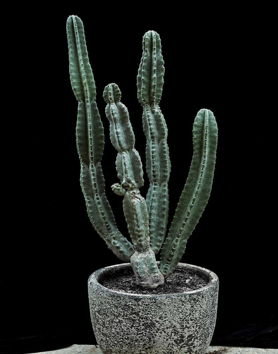 cactusfinger02