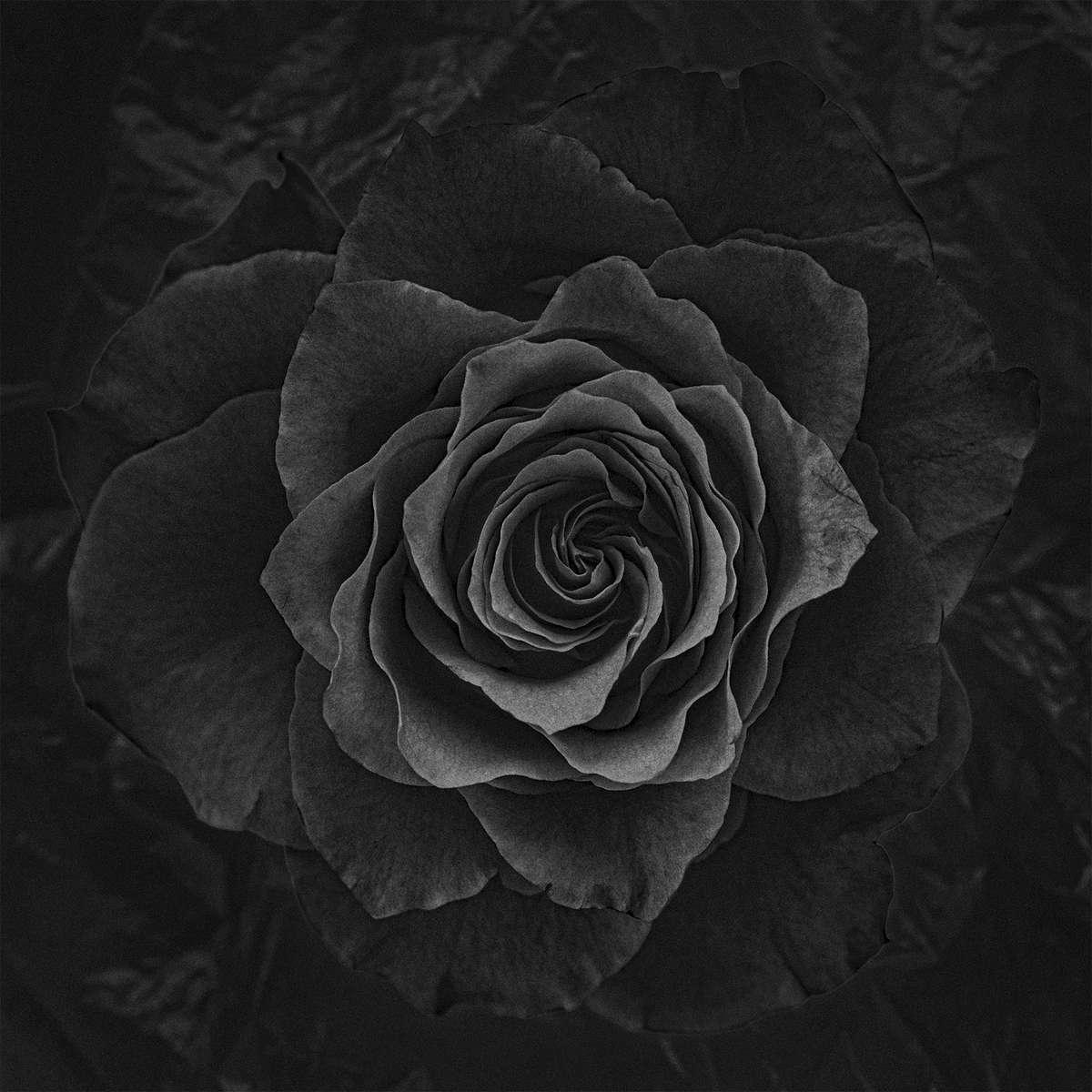 sqflower01