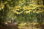 Country Walkers guided tour through a wooded trail in Waterbury Vermont.