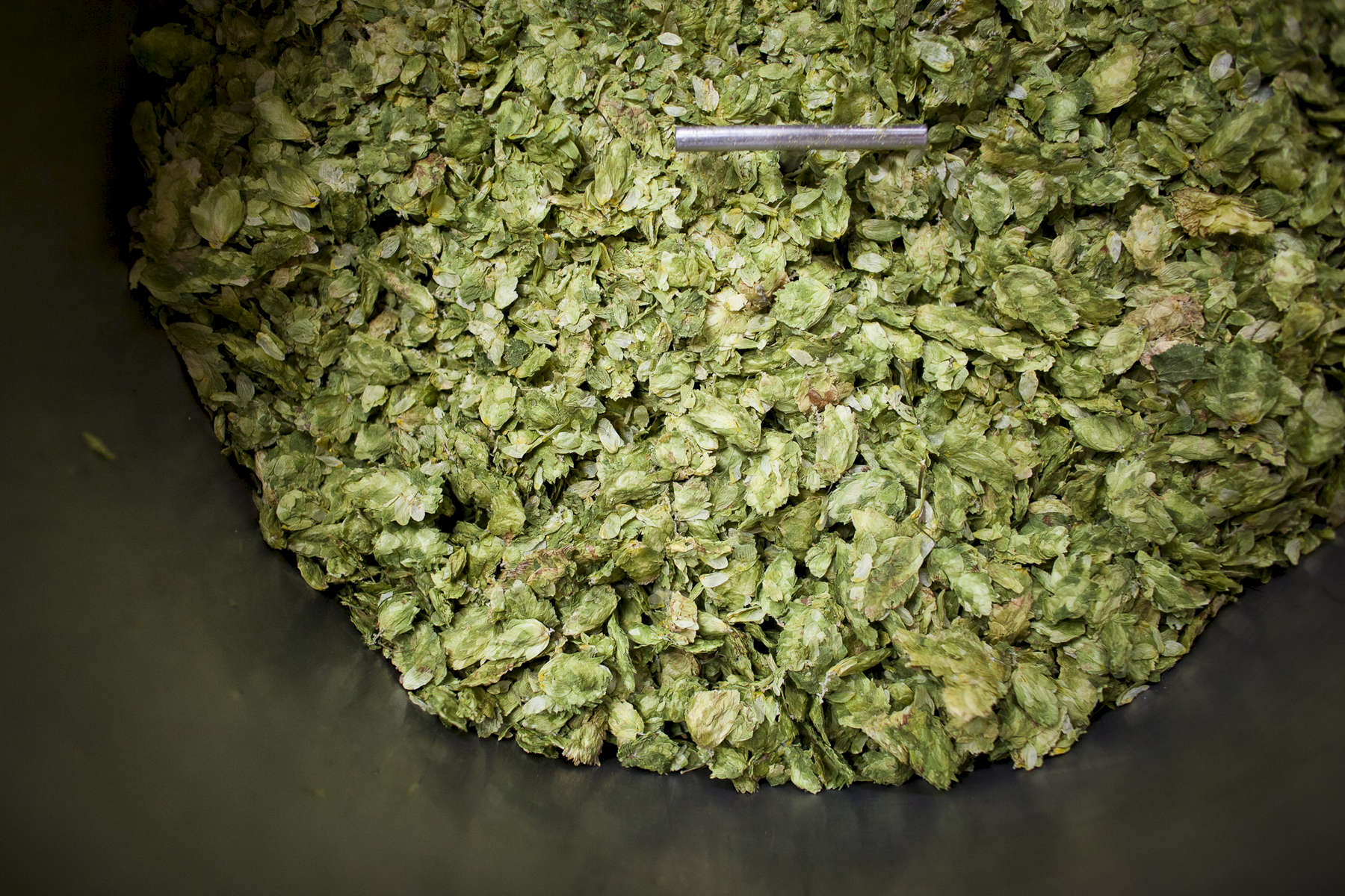 Detail shot of earthy dried Vermont hops in a barrel at home-based local brewery, Lawson's Finest Liquids.
