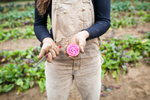 Young woman farmer holding candy striped beet in the fields. by Vermont photographers at Reciprocity Studio, Burlington