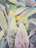 cactus-0987