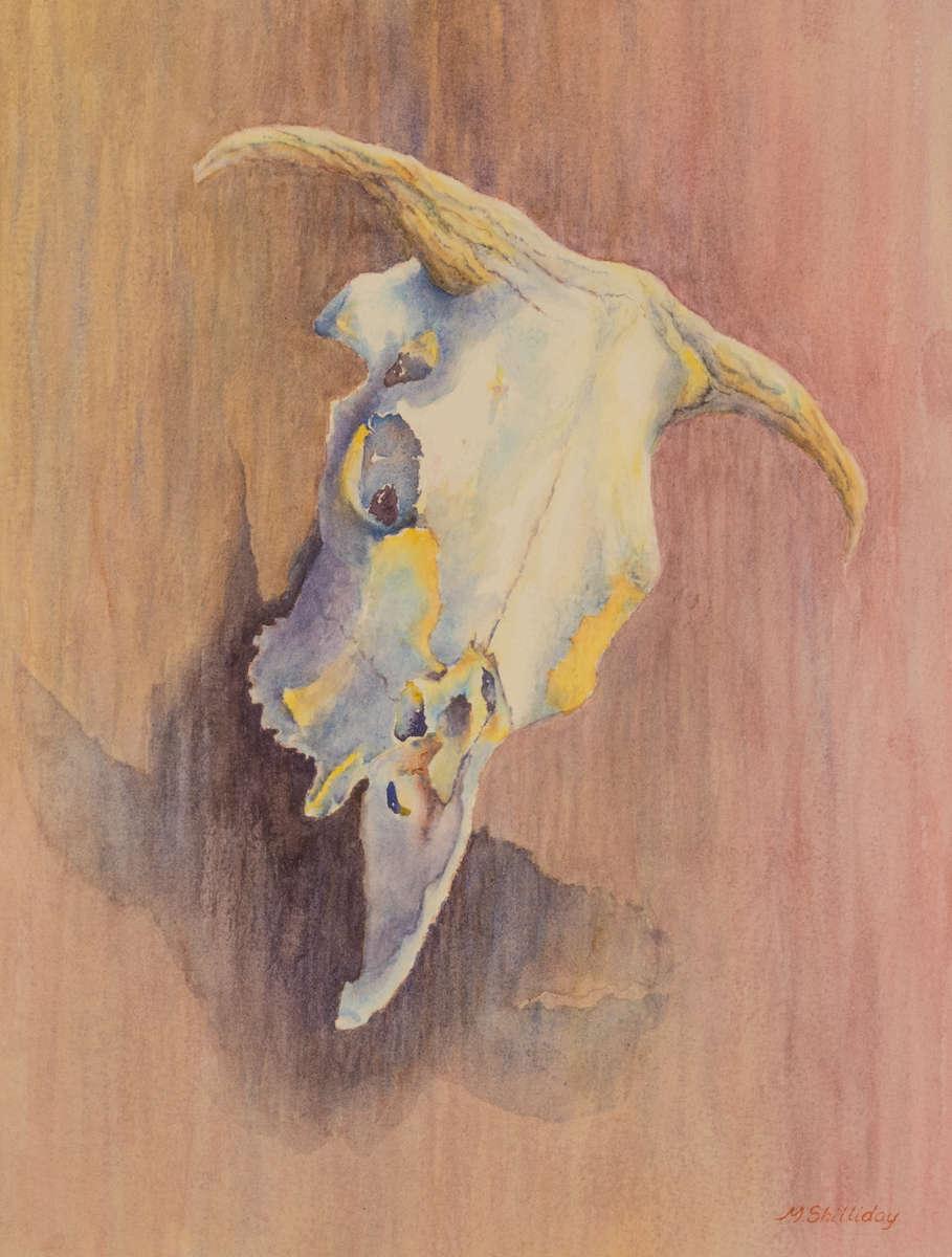 Cow skull on a barn at Midland School, Los Olivos, CA.