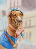 Cuban dog dressed up in hat and glasses for tourists.