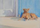 A dog in Viñales, Cuba. Watercolor by Martha Shilliday