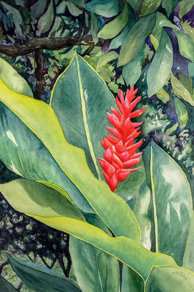 Flowering Ginger from Kauai, Hawaii.