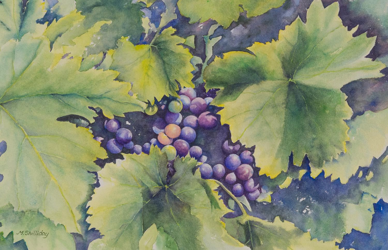 Grape Vine at Mattei's Tavern, Los Olivos, CA.