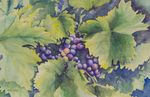 Grapes, watercolor by Martha Shilliday