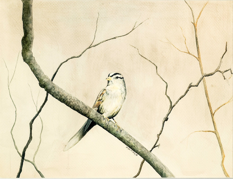 Sparrow on tree limb