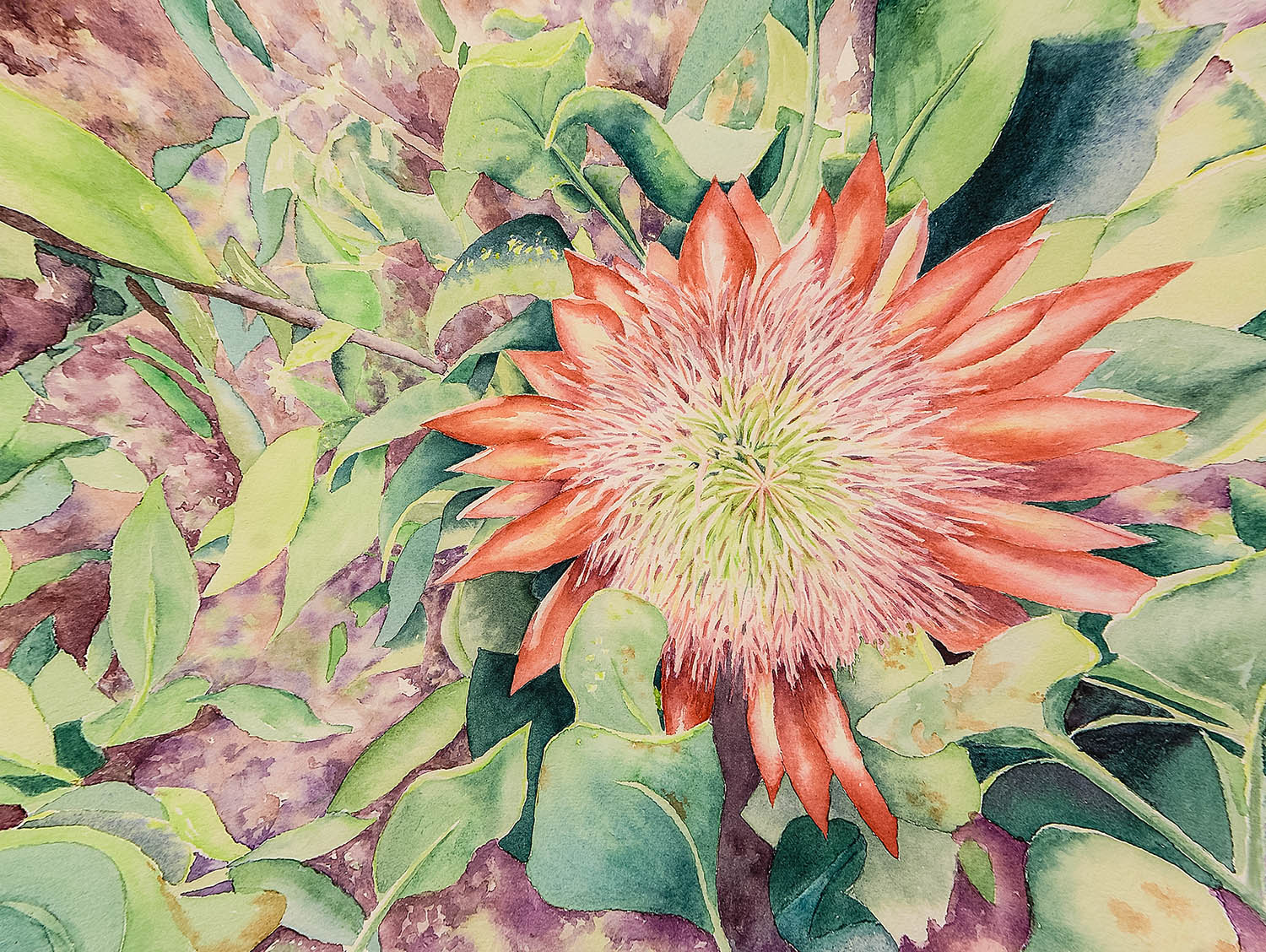Watercolor of a protia flower by artist Martha Shilliday.