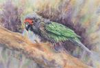Rodan, the pet parrot of Captain Jim Goodrich. Watercolor by Martha Shilliday.