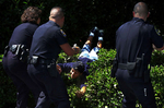 Riverside police officer Debora Foy, left, pulls a burglary suspect over a row of shrubs while taking him into custody on Latham Street in Riverside, Calif. Fellow officers keep theirguns drawn on the suspect. (The Press-Enterprise/ Mark Zaleski)
