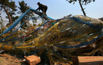 A fisherman tries to salvage rope, buoys and fishing nets tangled on broken trees. The tsunami destroyed several of his fishing boats and a storage warehouse conatining fishing equipment in Sendai, Japan.(The Press-Enterprise/ Mark ZaleskI)