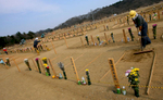 Gravesite workers carefully level out the dirt as they attend to a temporary burial site near a recycling center in Higashimatsushima, a ward of Sendai, Japan. (The Press-Enterprise/ Mark Zaleski)