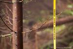 Kitselas-Forestry-4435