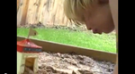A child confronts the demise of a beloved insect, comes to terms with the loss and moves on.