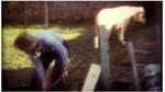 Spying ©Joe Gibbons  super 8 filmJ. Hoberman Top Ten List  1979