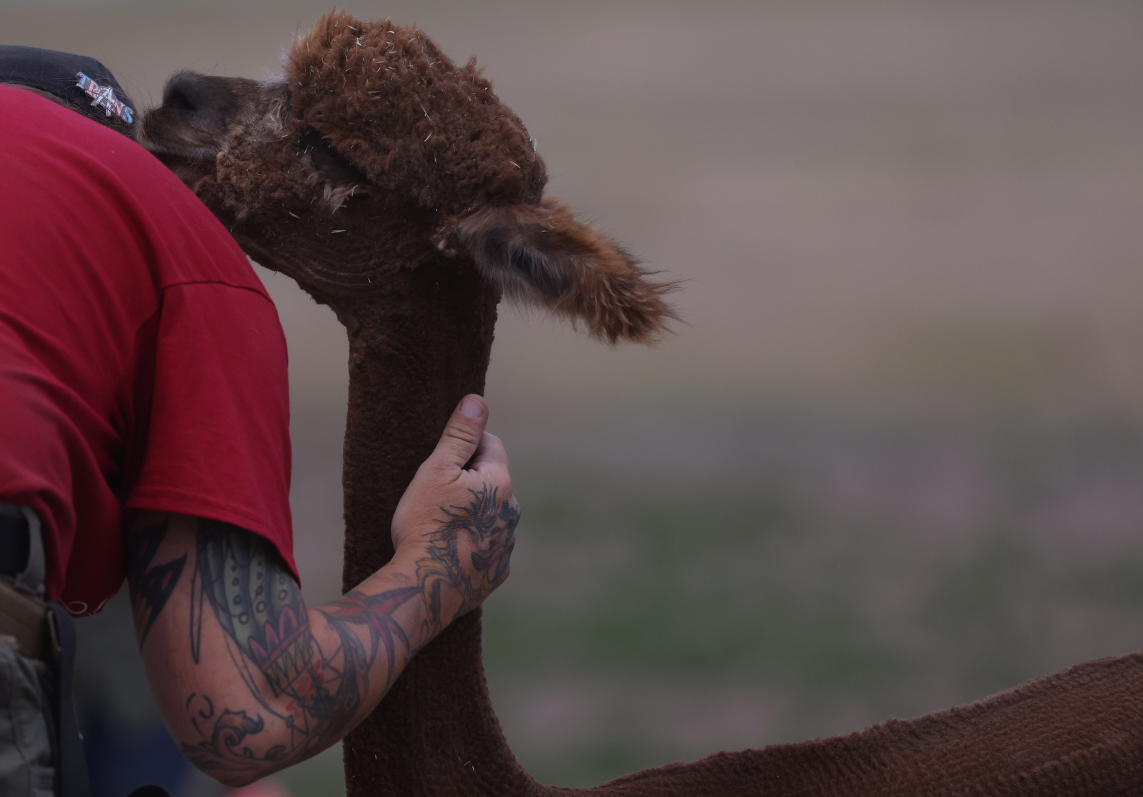 The Tenacious Unicorn Ranch is a trans haven alpaca ranch in rural Colorado.