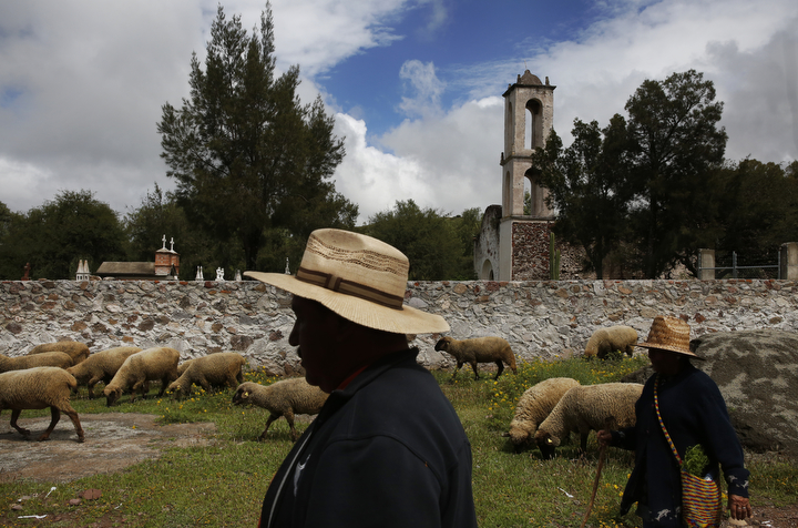 Eusebio Sanchez, left, helps his mother Guadalupe Mejia Sanchez, 78, right, and his father herd their sheep home after taking them out to graze in Santa Monica, Hidalgo, Mexico. Eusebio spends much of his time with his parents, making up for years of lost time, helping them care for their animals and take care of their health. It's bitter-sweet being home, according to Eusebio. He is happy to see his family but also sad to be torn away from his daughters.
