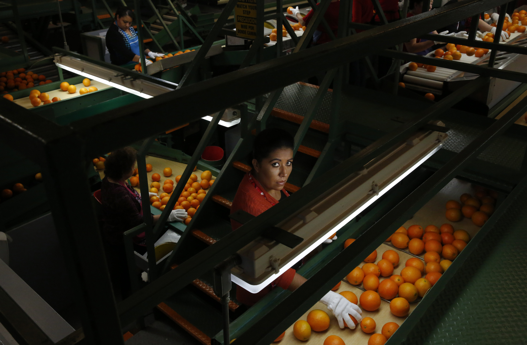 Erica Chavez sorts oranges in the Sun Pacific Farming and Shippers packing facility Feb. 14, 2015 in Exeter, Calif. As California enters into the fourth year of drought and farmers lose orchards and fallow fields, migrant worker jobs are becoming more scarce.
