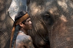 Laos-Asian-Elephant-Mahout-Photo-by-Cyril-Eberle-CEB_3240-web