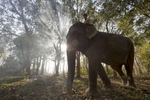 Laos-Asian-Elephant-Mahout-Photo-by-Cyril-Eberle-CEB_4845