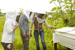 Bee_Keeping002