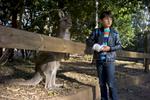 Koala Park - West Pennant Hills, NSW Australia