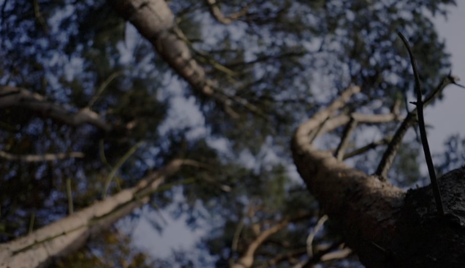 There's something lurking in the woods...These are the Beasts of the East, from CrossFit East Rocks.We spent a long time sketching, planning and making this film and we couldn't be more pleased with the result. Thanks to everyone involved, especially the East Rocks crew!A film by Jacob Walker, Last Light Films.