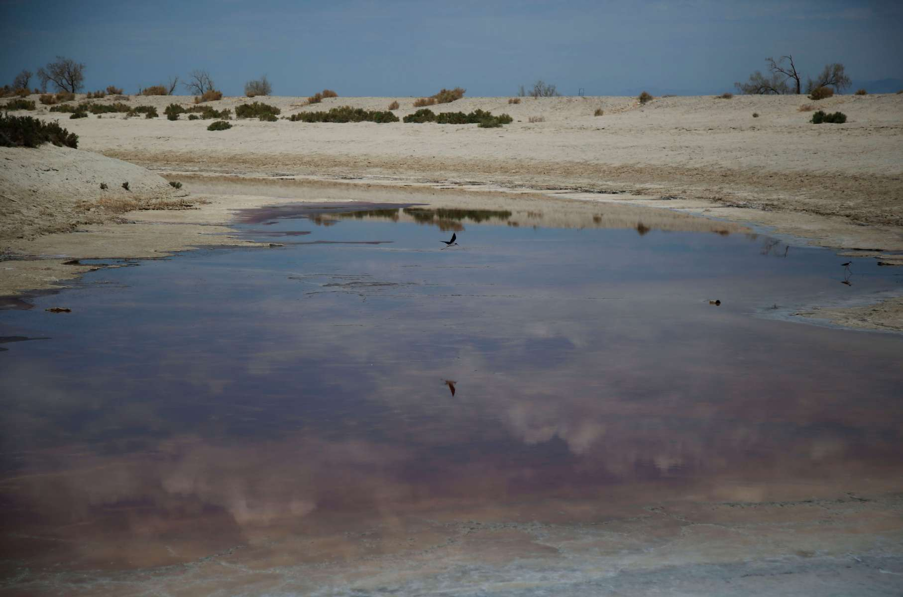 A bird flies over an almost evaporated canal, with toxic residues, near the Salton Sea as California faces its worst drought since 1977, in Salton City, California, U.S., July 4, 2021.