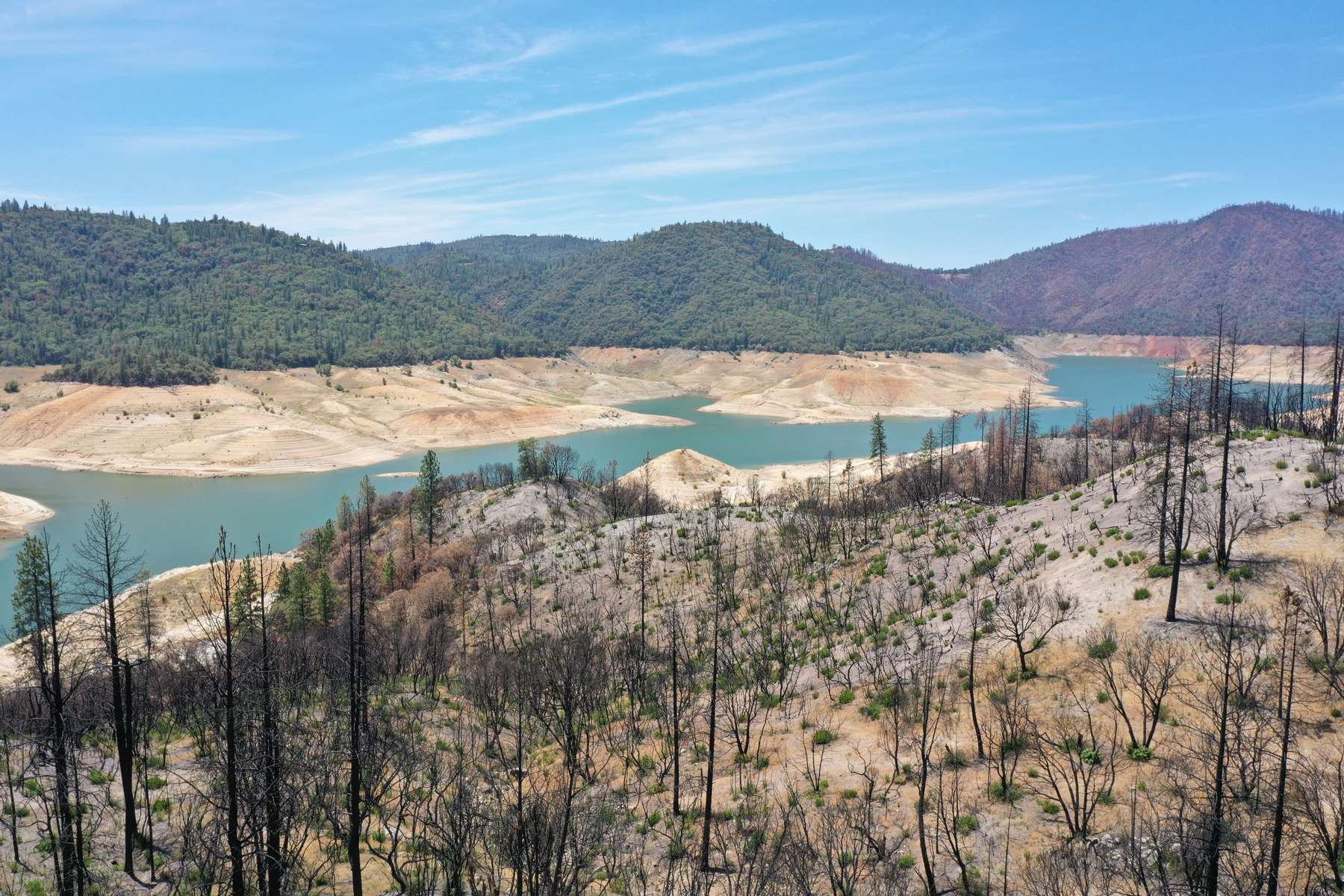 A drone view shows the burned trees from the 2020 Bear fire and the low water levels at Lake Oroville, which is the second largest reservoir in California and according to daily reports of the state's Department of Water Resources is near 35% capacity, near Oroville, California, U.S., June 16, 2021. Picture taken June 16, 2021.