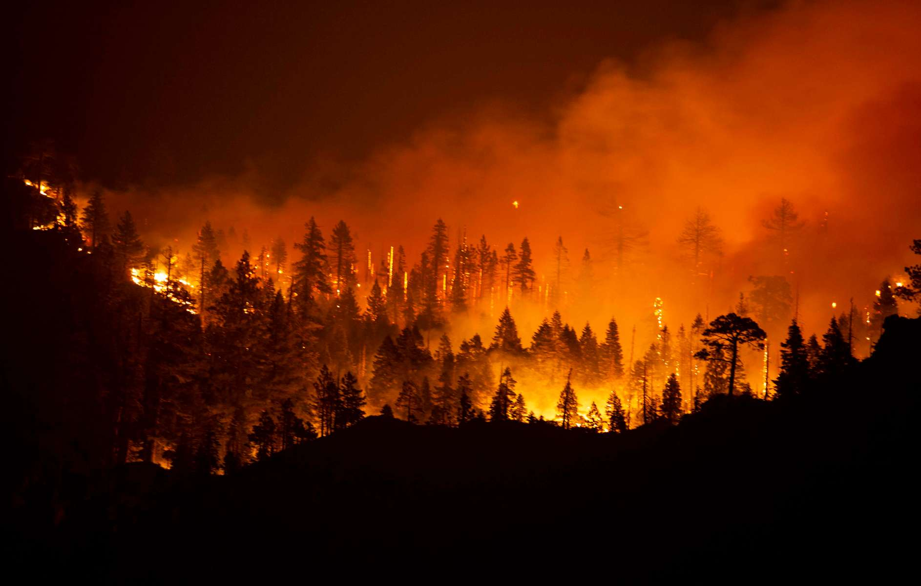 Trees burn as the Caldor fire rages on August 29, 2021, in the Eldorado National forest, California. The Caldor Fire has burned over 165,000 acres, destroyed over 660 structures and is currently 14 percent contained.