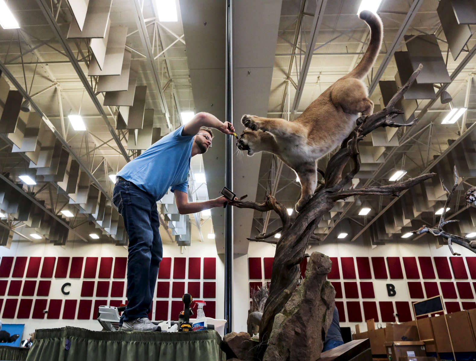 Ashley Barrett, from Chambersburg, Pennsylvania, prepares his pieces before the beginning of the World Taxidermy & Fish Carving Championships, in Springfield, Missouri on May 1, 2019.