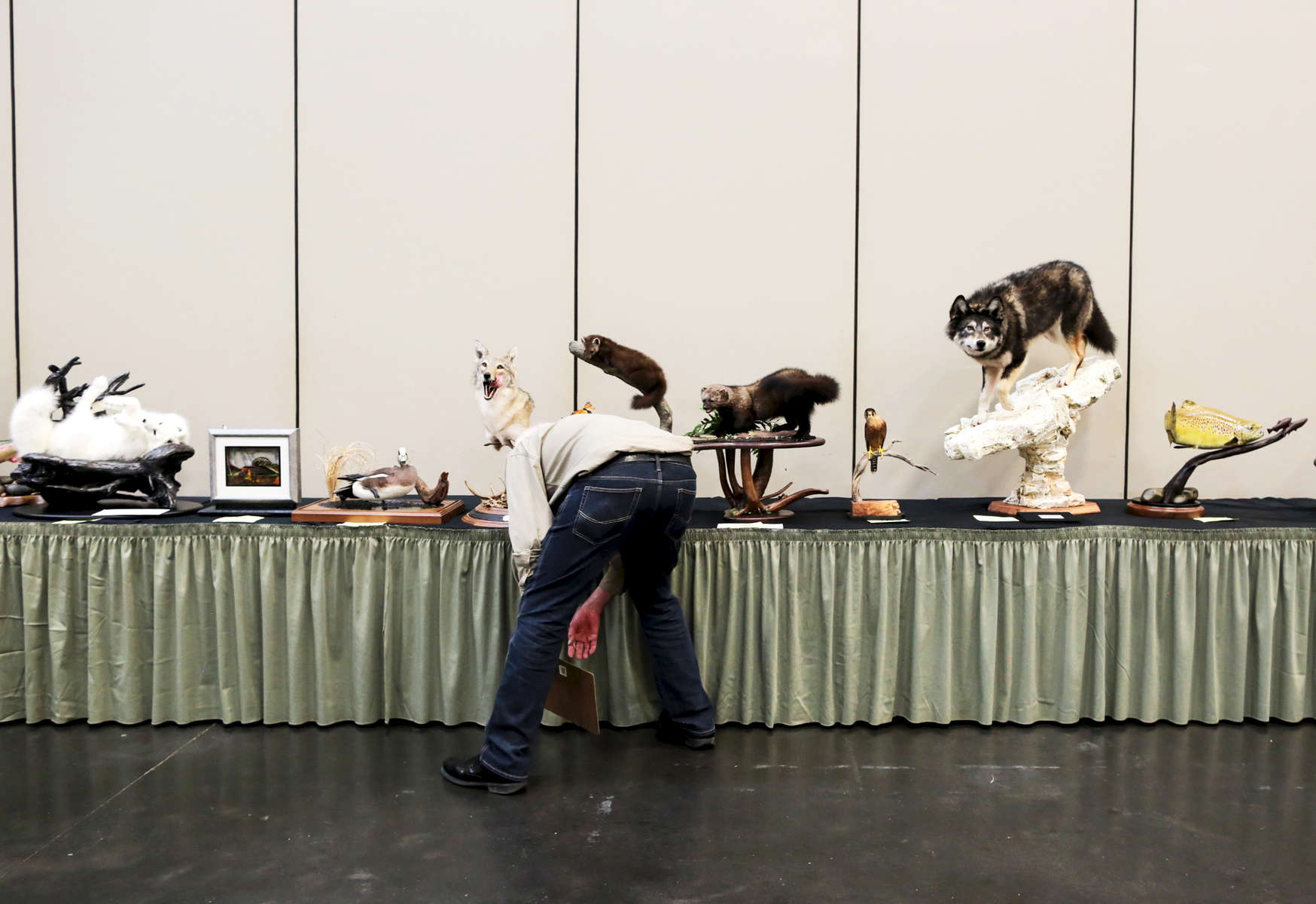 Harvey Ziegler, a bird judge, looks at the entries during the World Taxidermy & Fish Carving Championships, at the Springfield Expo Center, in Springfield, Missouri on May 1, 2019.