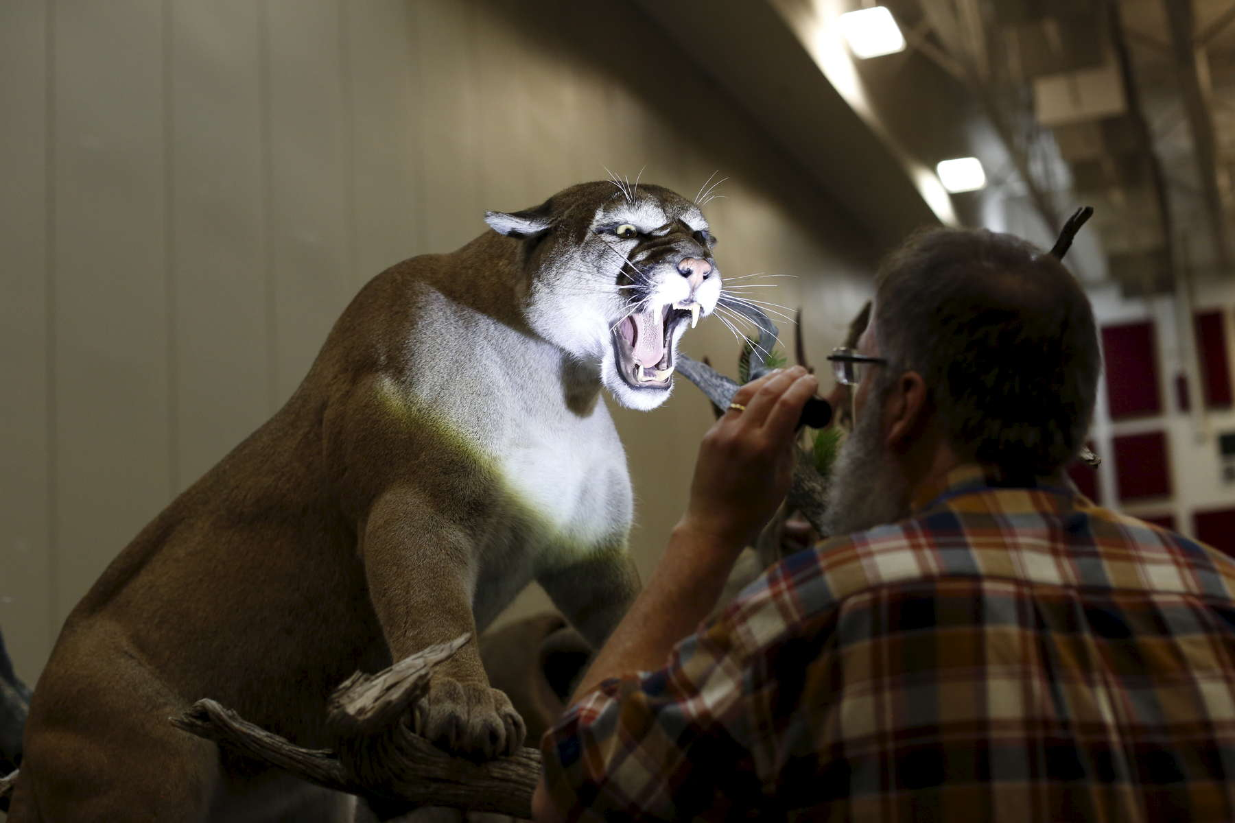 Judge Phil Soucy, looks at an entry during the World Taxidermy & Fish Carving Championships, at the Springfield Expo Center, in Springfield, Missouri on May 1, 2019.