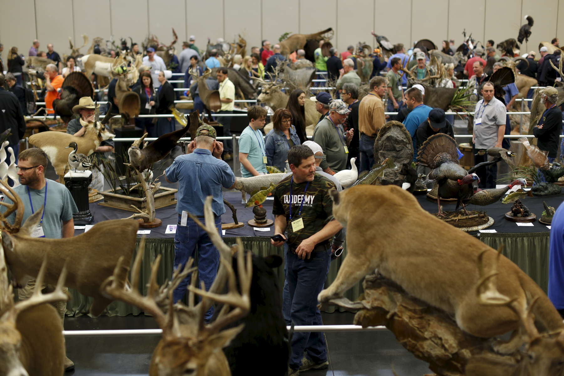 Once the judging is complete, the entries of the World Taxidermy & Fish Carving Championships, are open to the public in Springfield, Missouri on May 3, 2019.