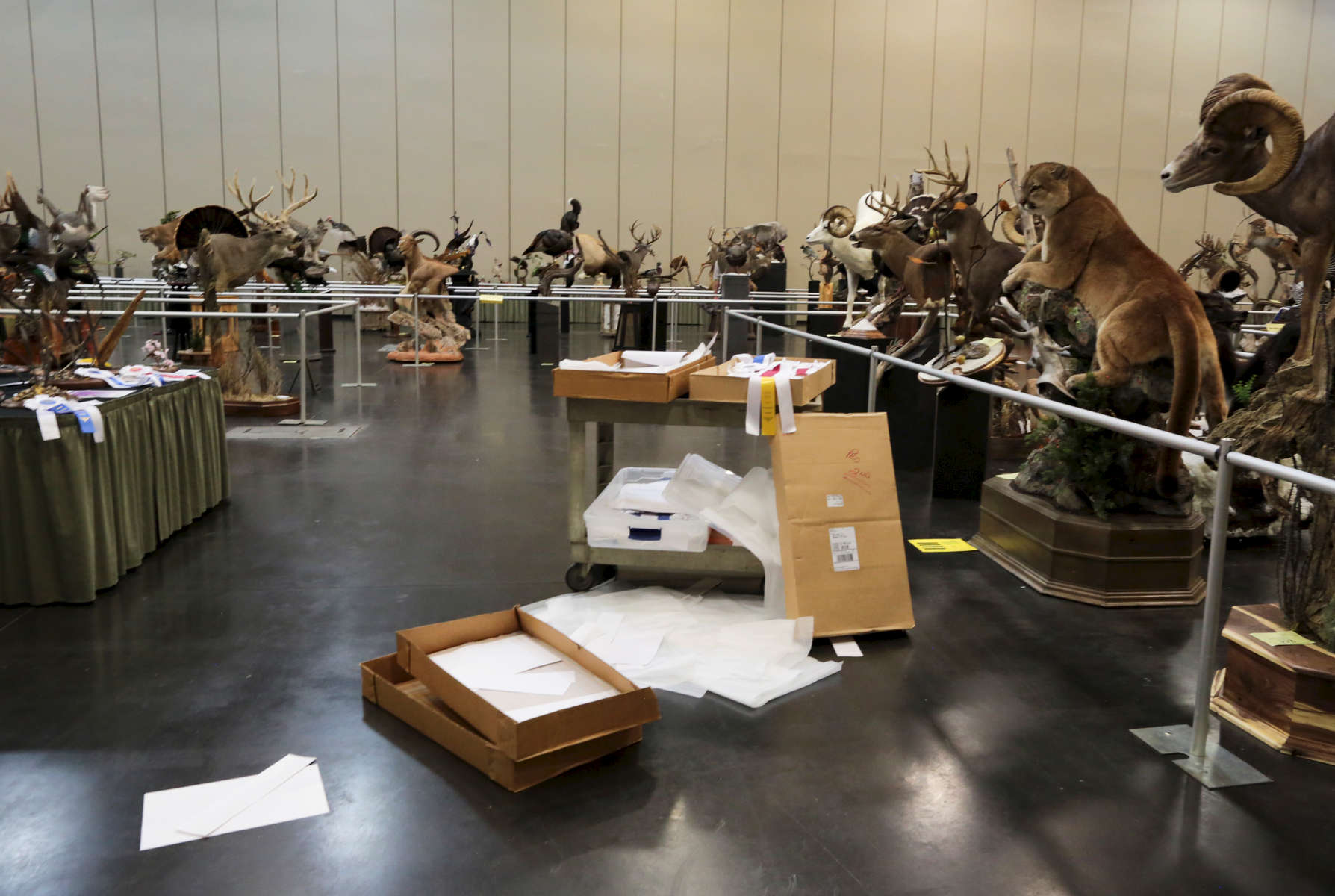 Winning ribbons, waiting to be distributed, at the end of the competition during to the World Taxidermy & Fish Carving Championships, in Springfield, Missouri on May 3, 2019.