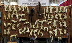 Squirrels mount forms from Ellzey's taxidermy are for sale at the Taxidermy Trade Show happening next to the World Taxidermy & Fish Carving Championships, in Springfield, Missouri on May 2, 2019.