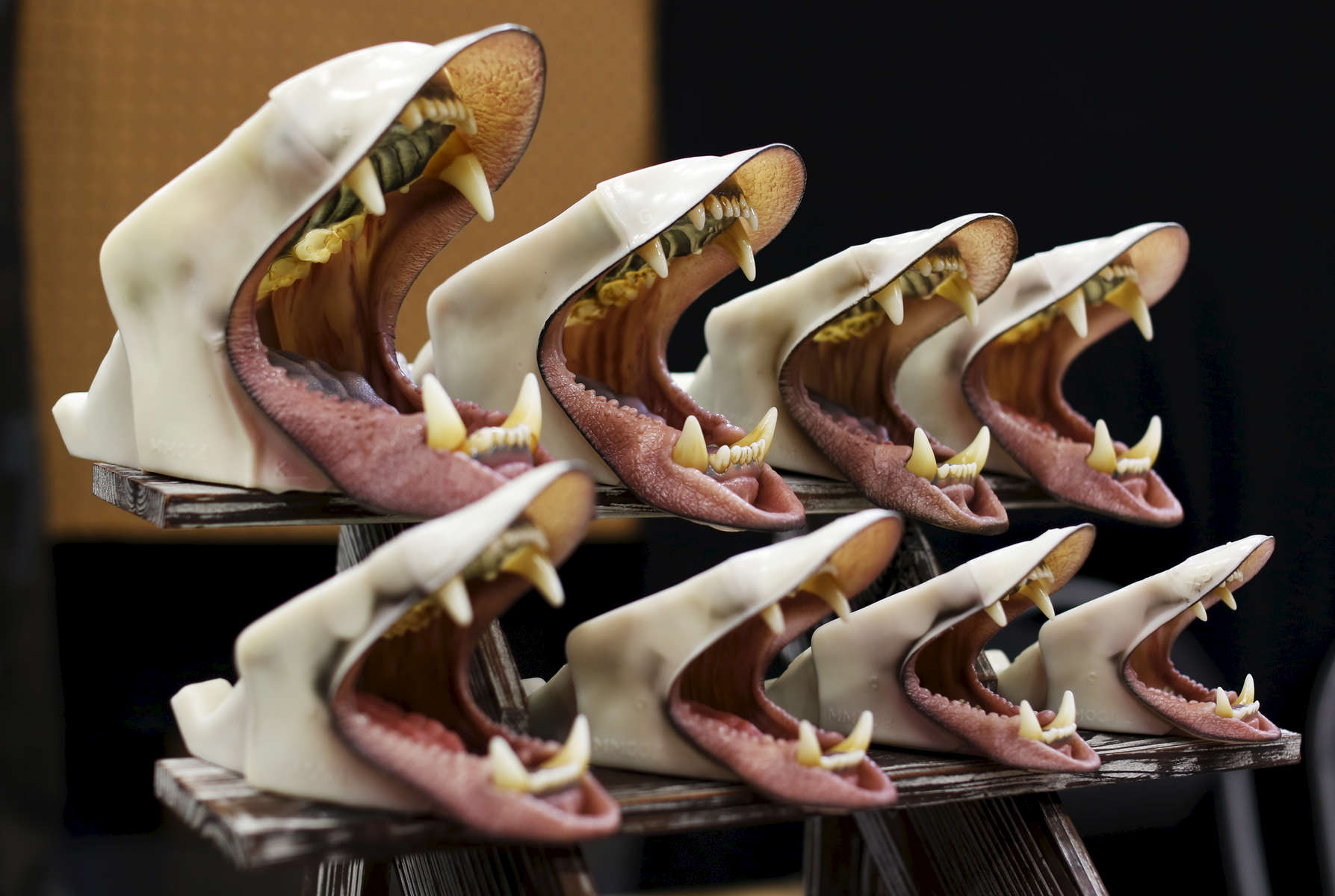 Reproductions of mouths are on sale at the Taxidermy Trade Show happening next to the World Taxidermy & Fish Carving Championships, in Springfield, Missouri on May 2, 2019.
