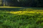 AaronLeclerc_GolfCourses_08
