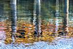 Harbor Reflection 1