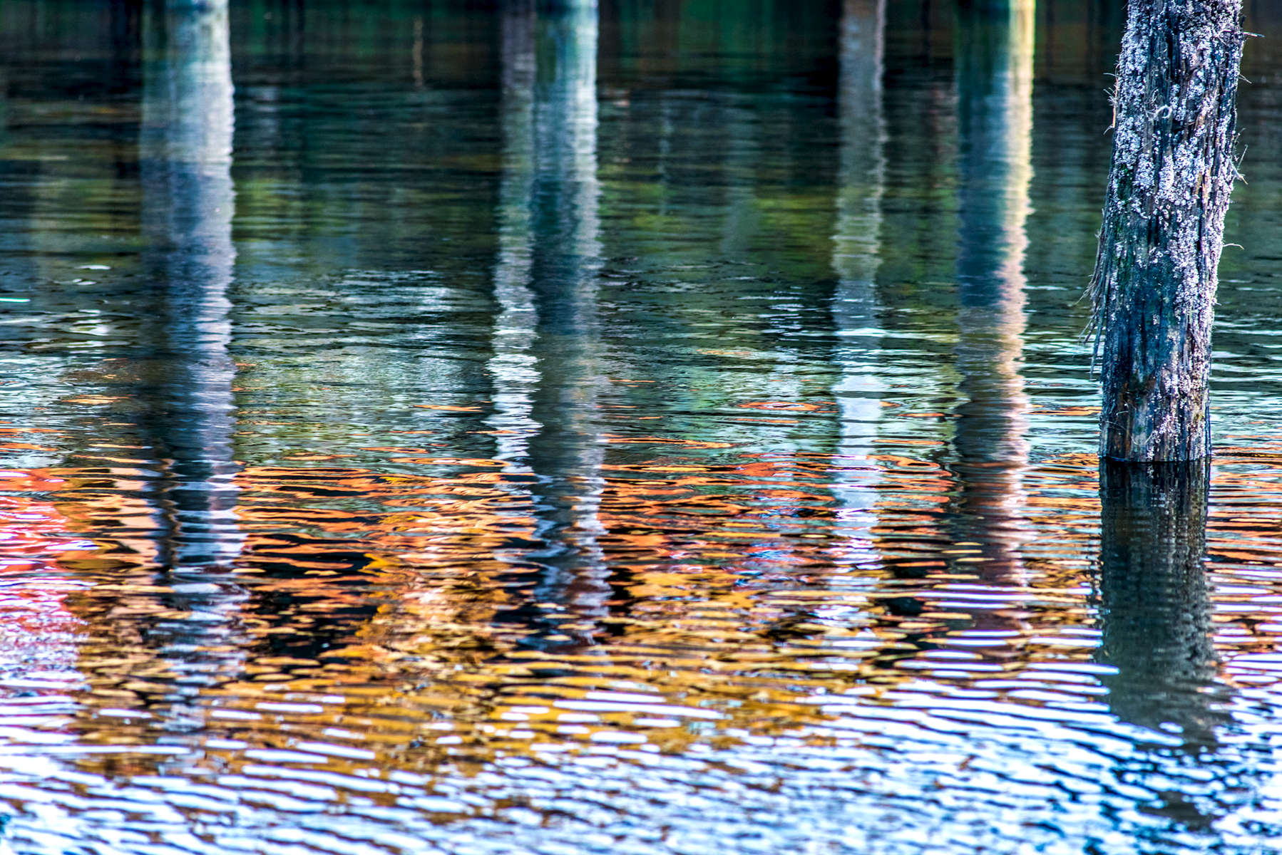 Harbor Reflections 1