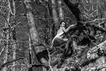 Wood Fairy 1