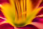 Flower Still Life 2