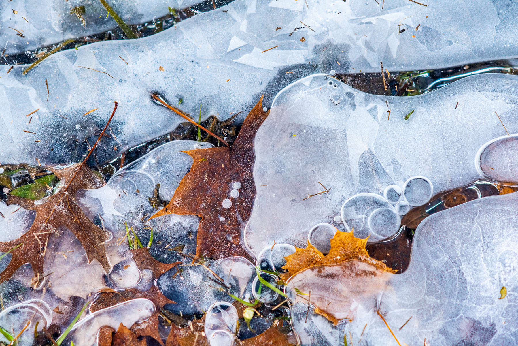 Ice & Leaves