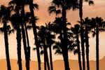Palms & Smoke