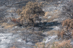 Forest Fire 1