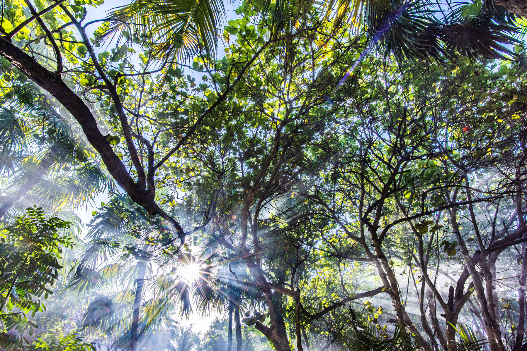 Jungle Mystique