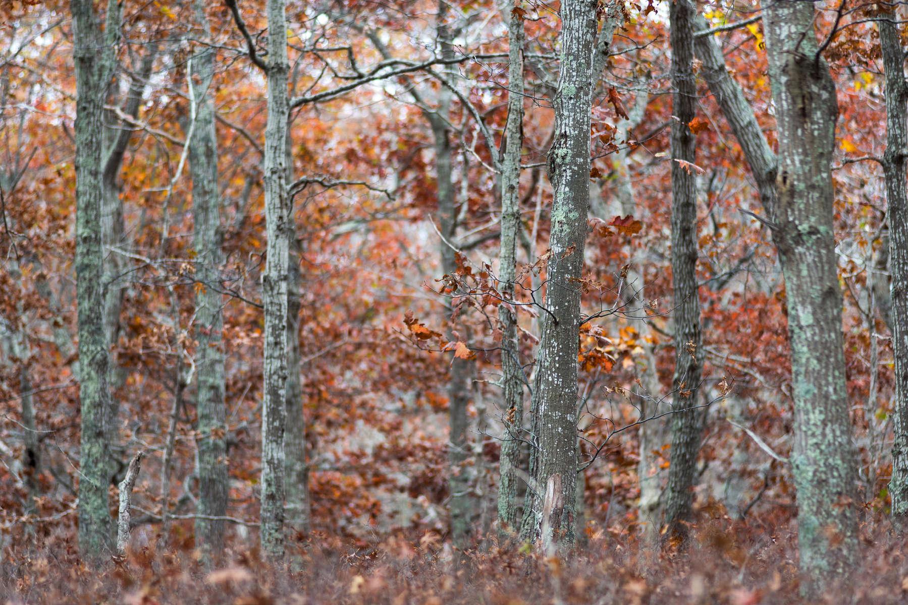 Brown Autumn Woods